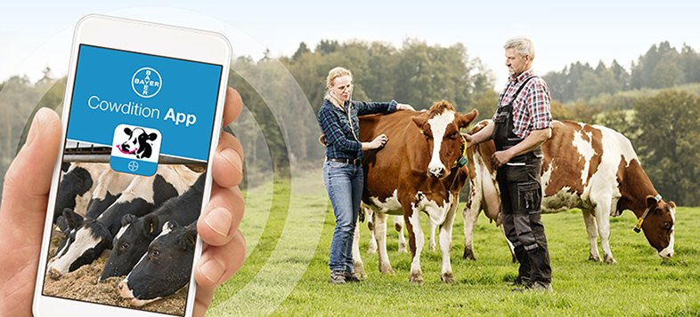 cowdition app